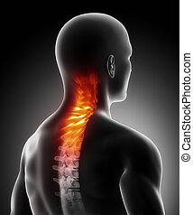 dolor, en, espina dorsal cervical, anatomía