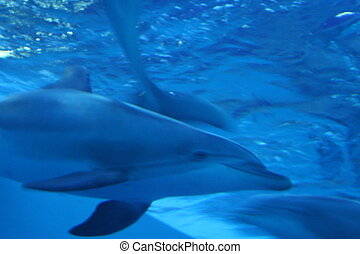 An image of a dolphin in the blue water of an enclosure.