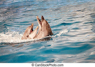 Dolphin couple in water - Couple of happy dolphins playing ...