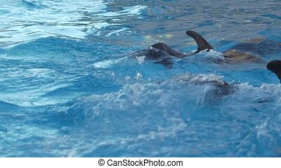 dolphin fin over the water in the blue pool Slow motion -...