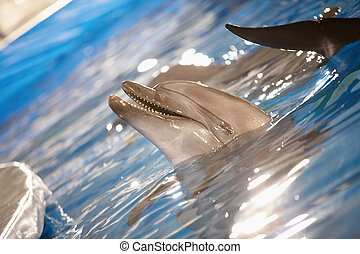 Dolphin fun - Close-up of happy dolphin playing in water