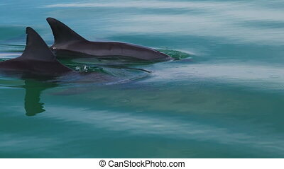 Dolphin having fun in the water