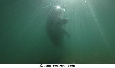 Dolphin having fun underwater - A slow motion underwater...