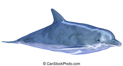 Dolphin - Illustration of a dolphin isolated on a white...