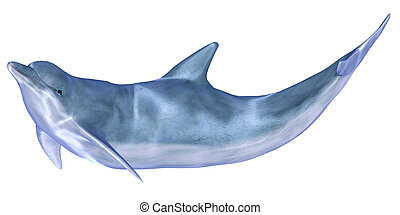 Illustration of a dolphin isolated on a white background