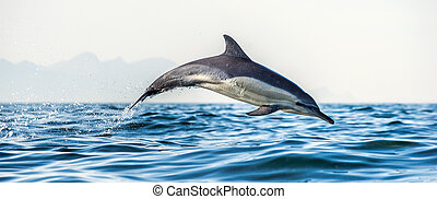 Dolphin in the ocean. Dolphins swim and jumping out of water...