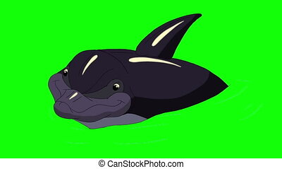 Dolphin in the Water. Animated footage, animal on a green...