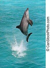 Dolphin Jump