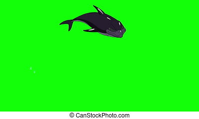 Dolphin Jump Out of the Water. Animated footage, animal on a green screen. Looped motion graphic.