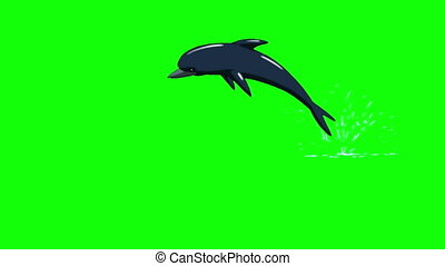 Dolphin Jump Out of the Water. Front View