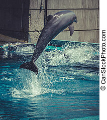 dolphin jump out of the water in pool