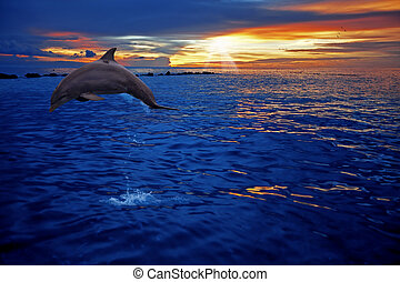 Dolphin jumping - A dolphin jumping in the sunset on Curacao