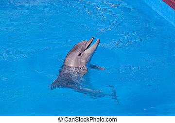 Dolphin of an afalin in blue water