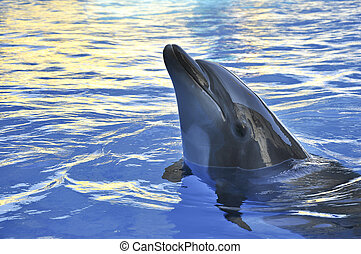 dolphin on the sunset