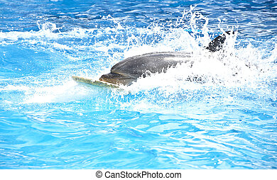 Dolphin on the surf