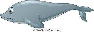 Dolphin on white