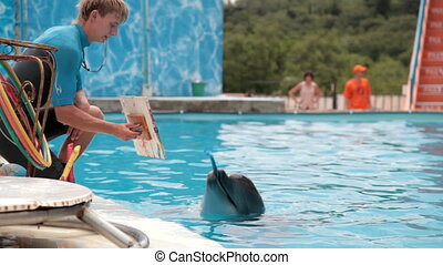 dolphin paints picture - dolphin paints a picture with a...