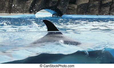Dolphin performance in pool - In Georgia Batumi Dolphinarium...