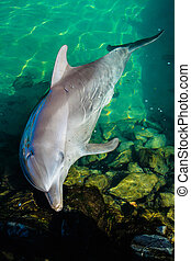 Dolphin Resting In A Pool