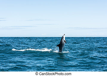 Dolphin shooting straight out of the water in South Africa