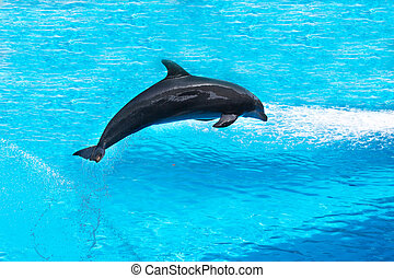 dolphin show in Canary Island dolphinarium. Spain