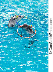 dolphin spinning hoop in the pool