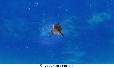 dolphin - swmming dolphin