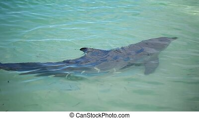 Dolphin swimming in the sea - Dolphin swimming in turquoise...