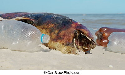 Dolphin thrown out by the waves lies on the beach is surrounded by plastic garbage. Bottles, bags and other plastic debris near dead dolphin on sandy beach on Sea background. Plastic pollution
