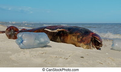 Dolphin thrown out by the waves lies on the beach is surrounded by plastic garbage. Bottles, bags and other plastic debris near is dead dolphin on sandy beach