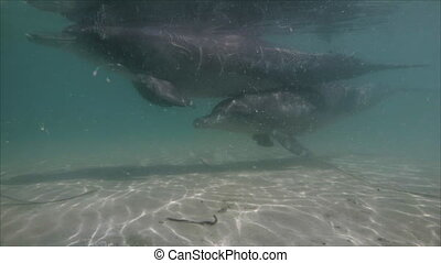 Dolphin underwater shot - A medium shot of a dolphin at...