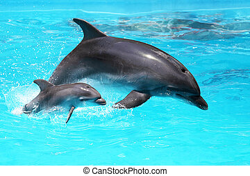 Dolphin with a baby floating in the water - Two dolphins...