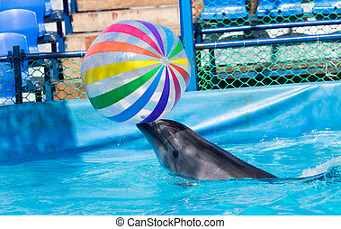 dolphin with a ball in the pool