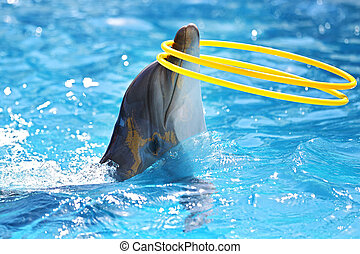 Dolphin with a hula-hoop