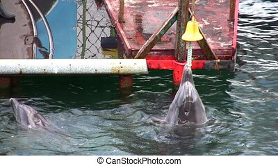 dolphin with bell - Dolphin with bell