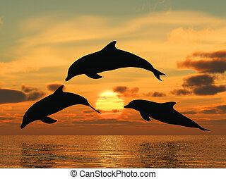 dolphin yellow sunset - Three dolphins floating at ocean...