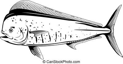 dolphinfish, pez, negro, blanco, común