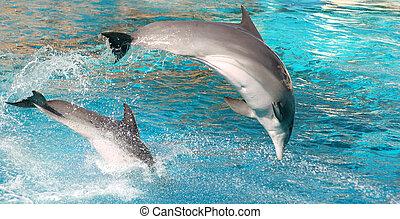 dolphins, показать