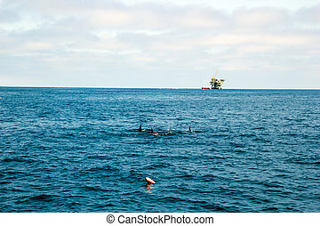 Dolphins and Oil Rig