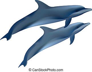 dolphins., dos, ilustración, fondo., vector, blanco