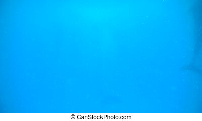 Dolphins in deep blue sea or ocean