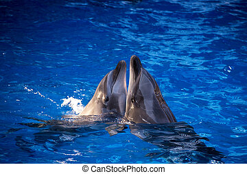 Dolphins in the ocean. Dolphins with a scratched back. Hunting for dolphins. Animal protection
