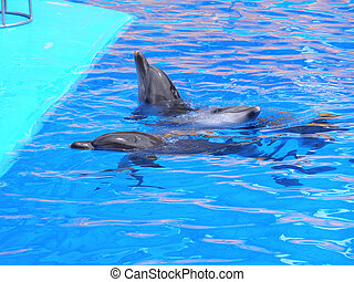 Dolphins in the pool