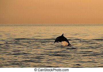 Dolphin's jump in sunrise
