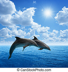 Dolphins jumping - Couple jumping dolphins, blue sea and...