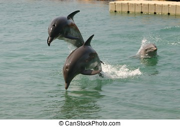 Dolphins - Dancing Dolphins