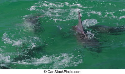 Dolphins playing together