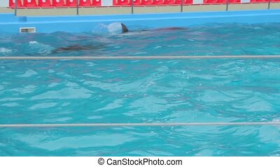 Dolphins Swim In The Pool - Dolphins swim in the pool...