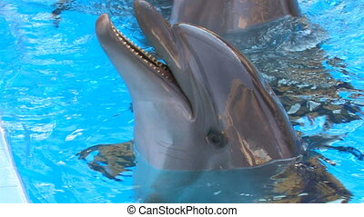 Dolphins swimming in blue water, ,