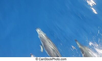 Dolphins swimming in waves